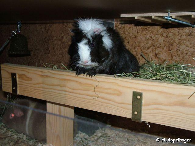 http://www.salat-killer.de/2008_meeries/2008-12-08_lester.jpg