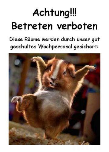 http://www.salat-killer.de/pix/kampfschwein.jpg