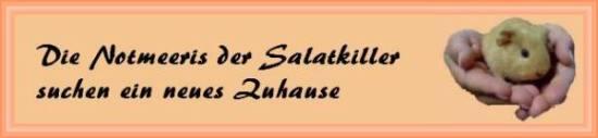 Notmeeris der Salatkiller