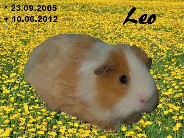 Leo RBB