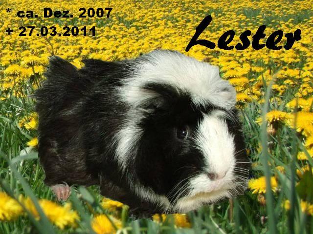 Lester RBB