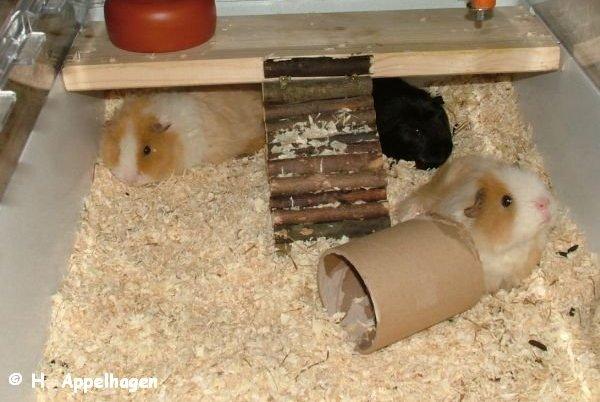 spielzeug f r hamster selber machen hamsterh ngematte hamster spielzeug hamsterk fig. Black Bedroom Furniture Sets. Home Design Ideas