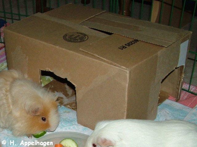 meerschweinchen in not druckvorschau m kelig trauer wetter seite 1. Black Bedroom Furniture Sets. Home Design Ideas